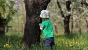 pohon-dan-anak